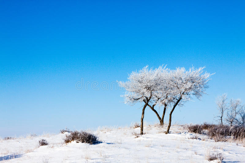 Bomen op snowfield royalty-vrije stock fotografie