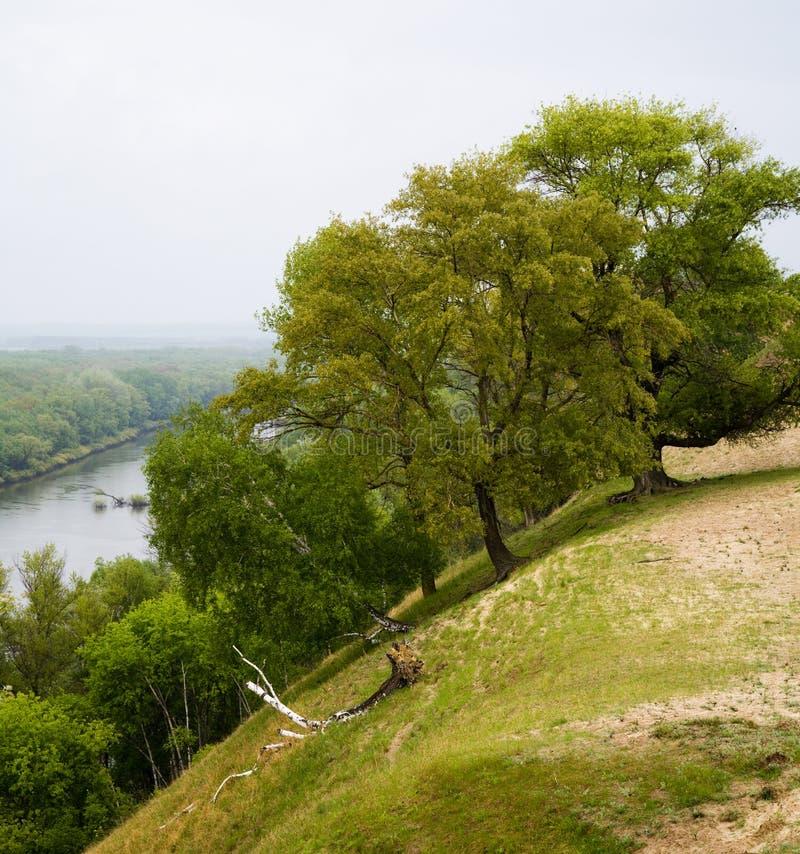 Bomen op steile rivierbank stock foto