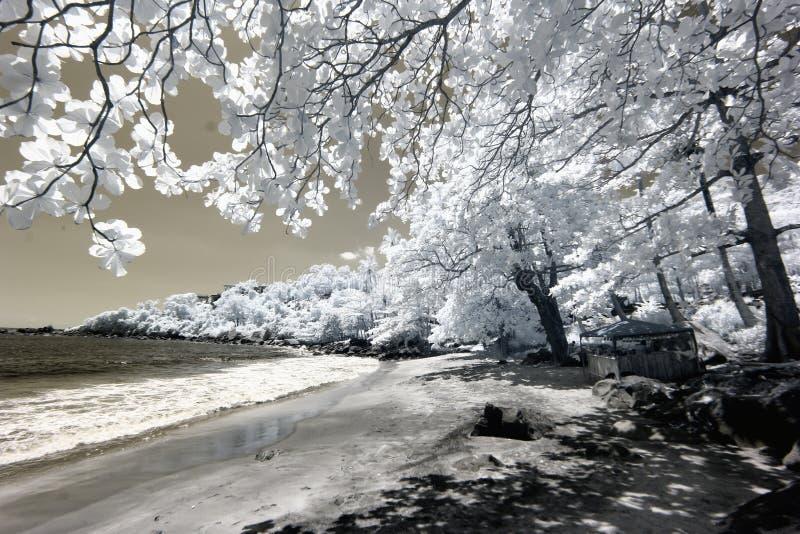 Bomen op strand in infrared royalty-vrije stock fotografie