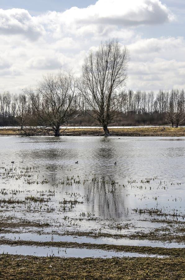 Bomen in Ossenwaard royalty-vrije stock afbeeldingen