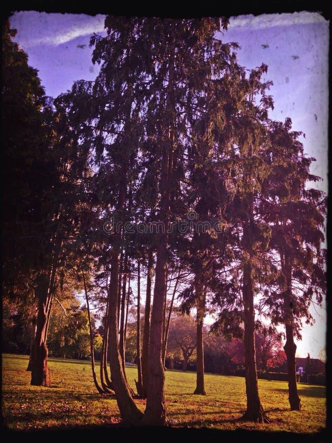 Bomen in park stock afbeelding