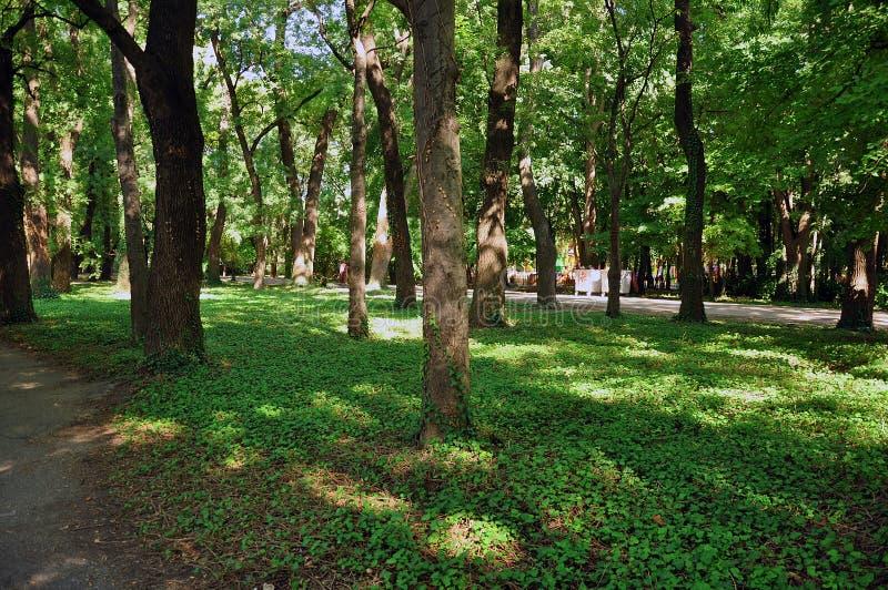 Bomen in park stock foto