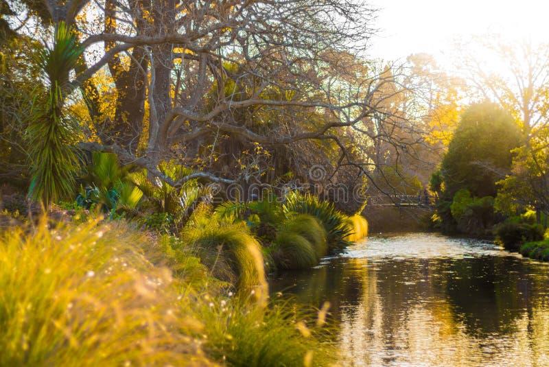 Bomen, rivier, botanische tuin, Christchurch stock foto's