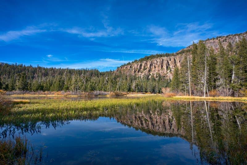 Bomen rond het meer in Mammoetmeren, Californië royalty-vrije stock foto's