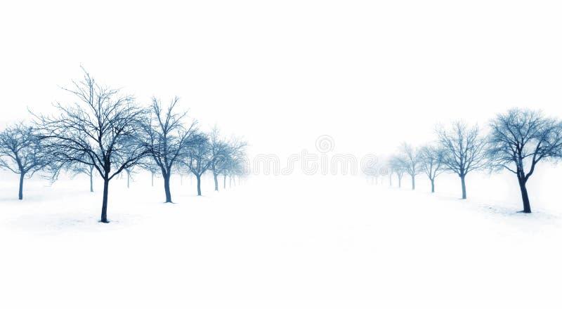Download Bomen in sneeuw stock afbeelding. Afbeelding bestaande uit covering - 10776495