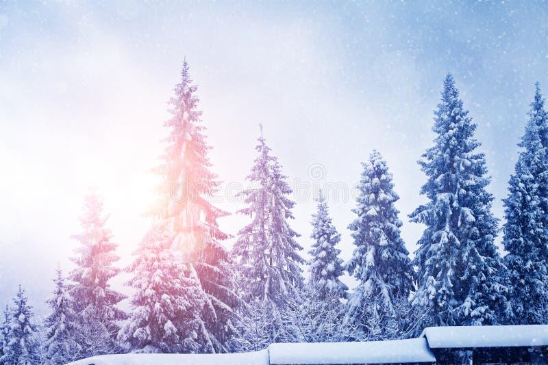 Bomen in sneeuw en zonlicht stock afbeeldingen