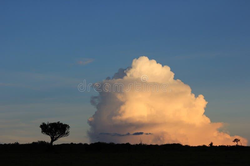 Bomen tegenover wolken royalty-vrije stock afbeeldingen