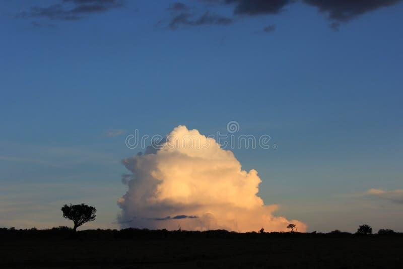Bomen tegenover wolken 2 stock afbeelding