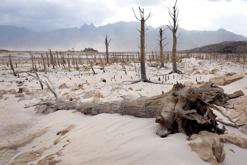 Bomen in Theewaterskloof-Dam, de hoofddam van Cape Town ` s, met uiterst - lage niveaus stock foto's
