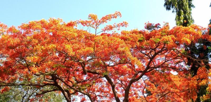 Bomen tijdens de lentetijd bij dag royalty-vrije stock foto's