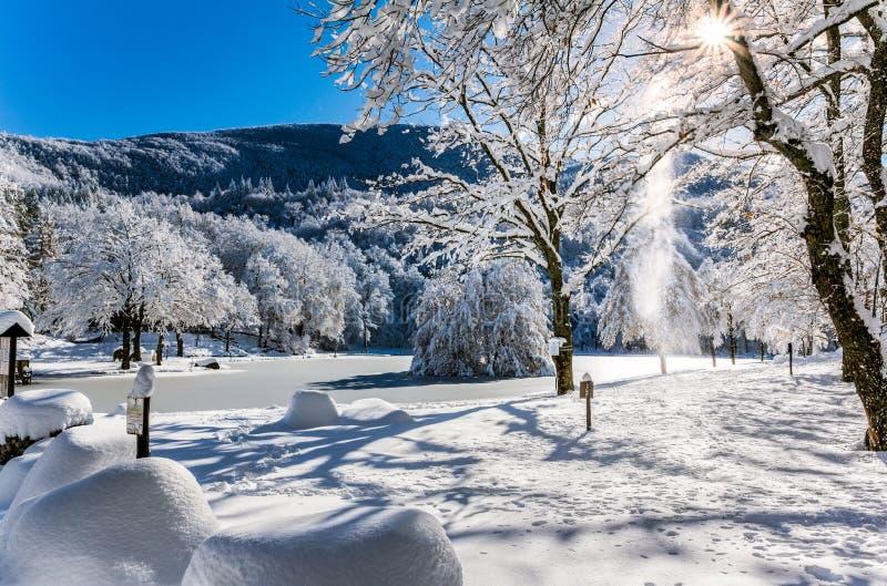Bomen tijdens de winter in sneeuw wordt behandeld die stock afbeelding