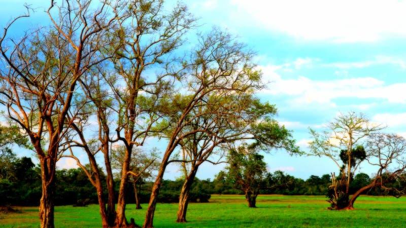 Bomen van aard stock afbeeldingen