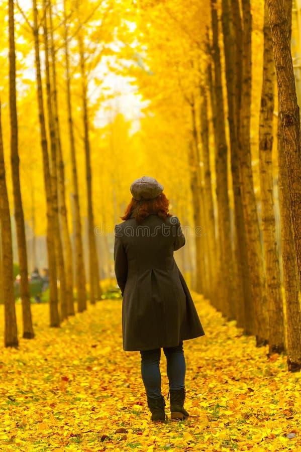 Bomen van de herfst de gouden ginkgo en jonge vrouw stock afbeelding