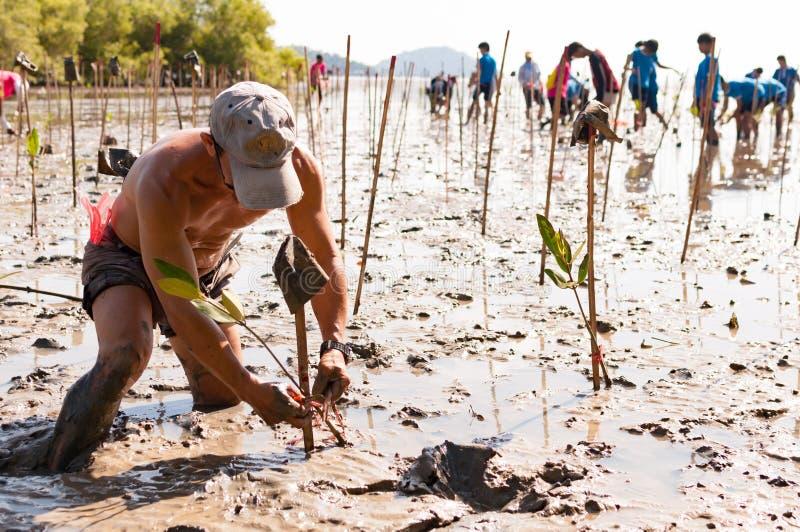 Bomen van de vrijwilligersinstallatie de jonge mangrove bij de moerassen nabijgelegen Saphan royalty-vrije stock fotografie