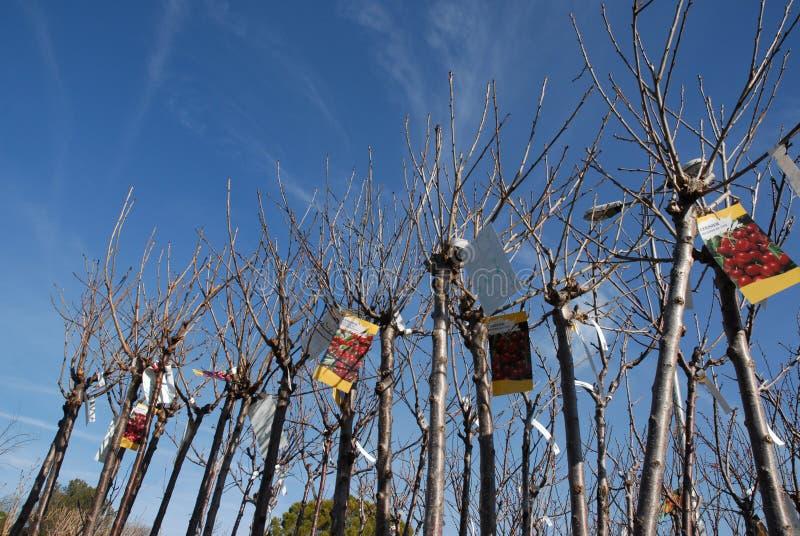 Bomen voor tuin in de lente stock afbeelding