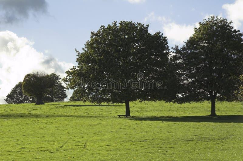 Bomen in weide stock afbeeldingen