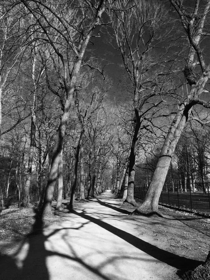 Bomen in zwart-wit royalty-vrije stock afbeeldingen