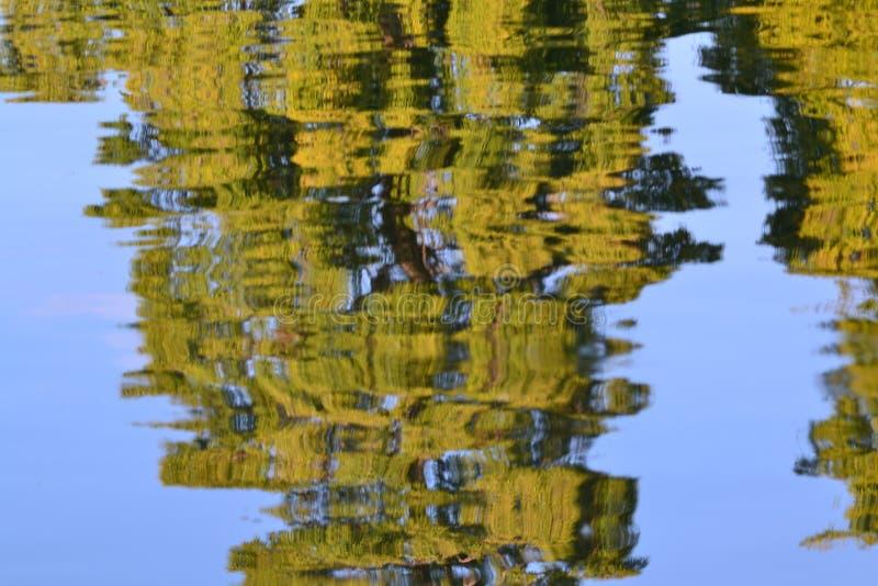 bomenbezinning stock fotografie