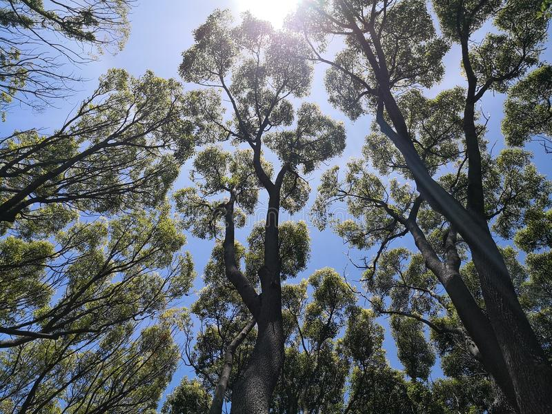 Bomenbodems omhoog stock afbeeldingen