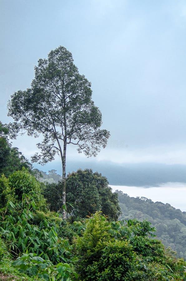 Bomenlandschap op de berg De achtergrond van het onduidelijke beeld royalty-vrije stock foto