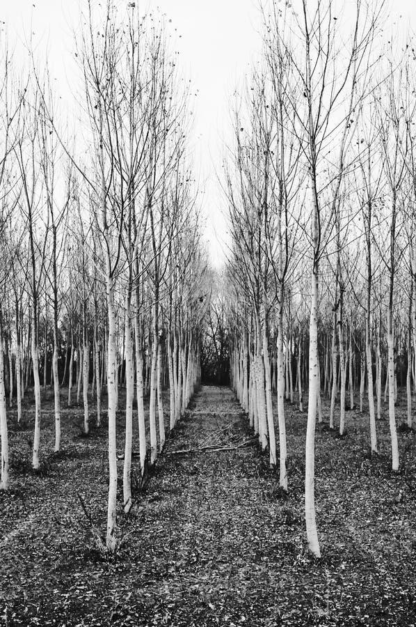 bomenlijnen stock fotografie