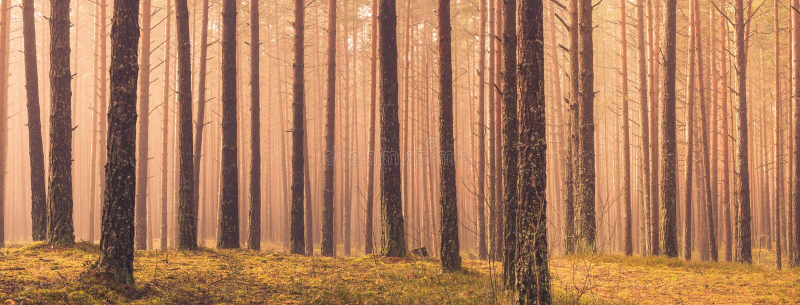 Bomenpanorama stock afbeeldingen