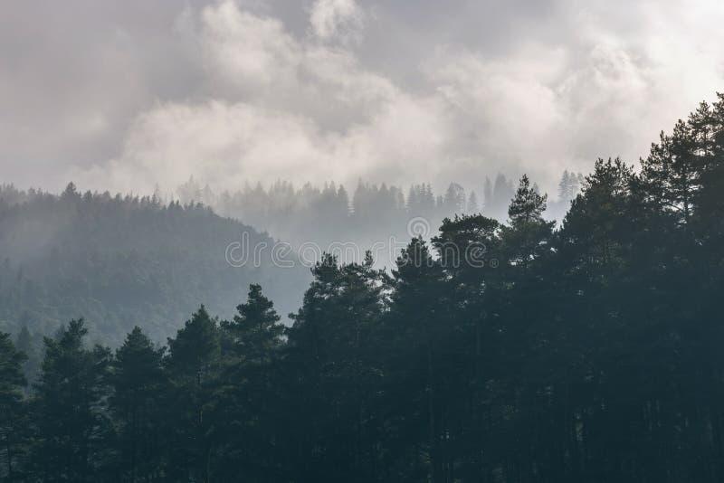 Bomenpieken tijdens mistige ochtend royalty-vrije stock foto's