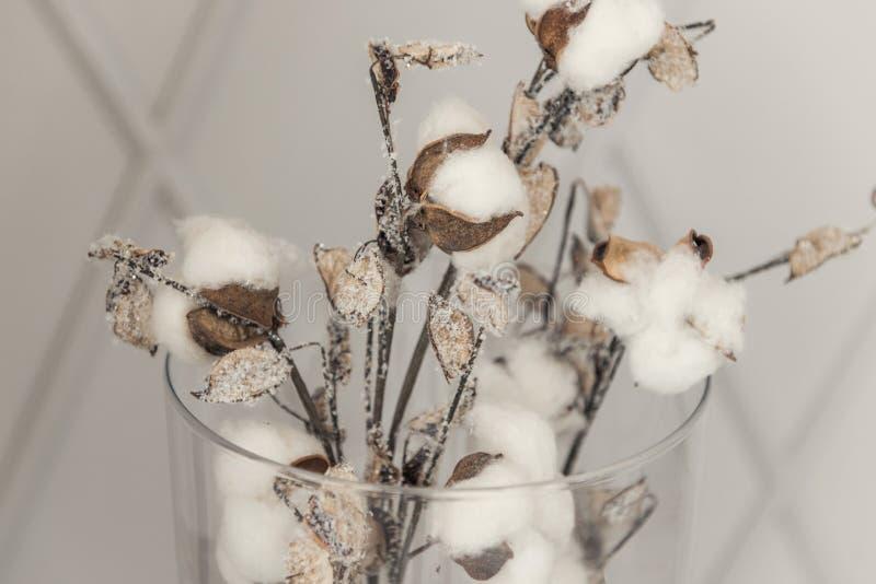Bomullsblommor som ett symbol av mjukhet och nytt liv royaltyfria foton