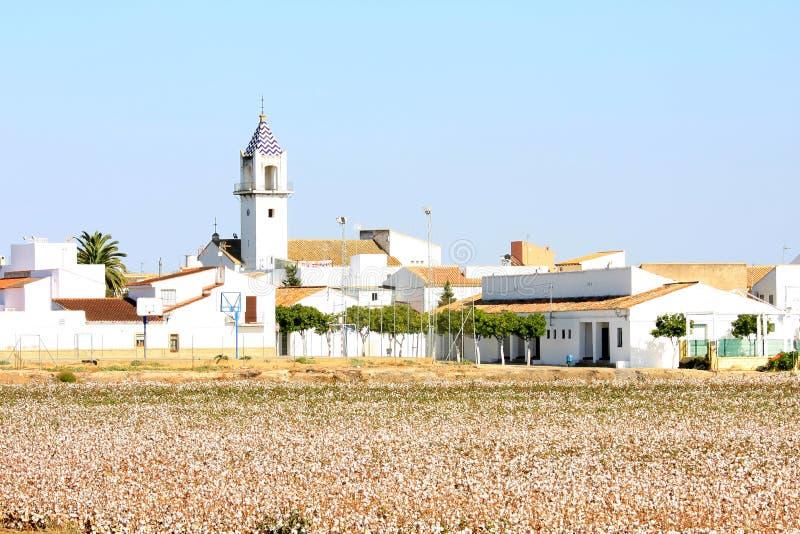 Bomullskoloni nära El Viar i Andalusia, Spanien fotografering för bildbyråer