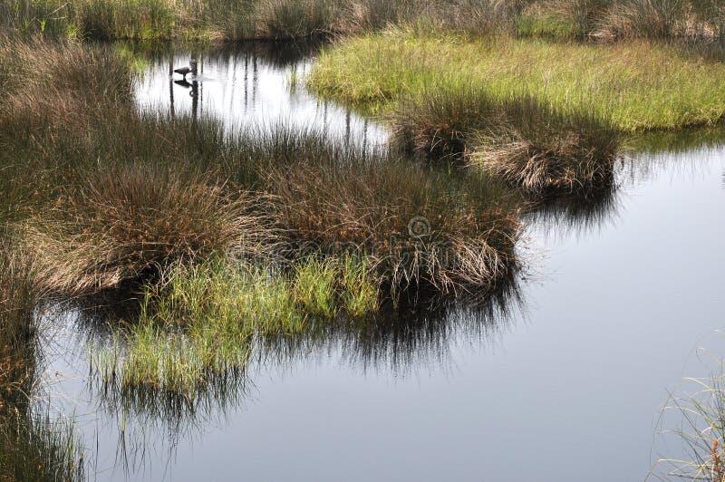 Download Bon Secour National Wildlife Refuge Stock Photo - Image: 14856240