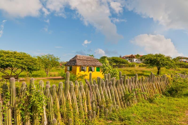 Bonaire färben sich nach Hause und Zaun des Kaktus - niederländische Antillen gelb stockfotos