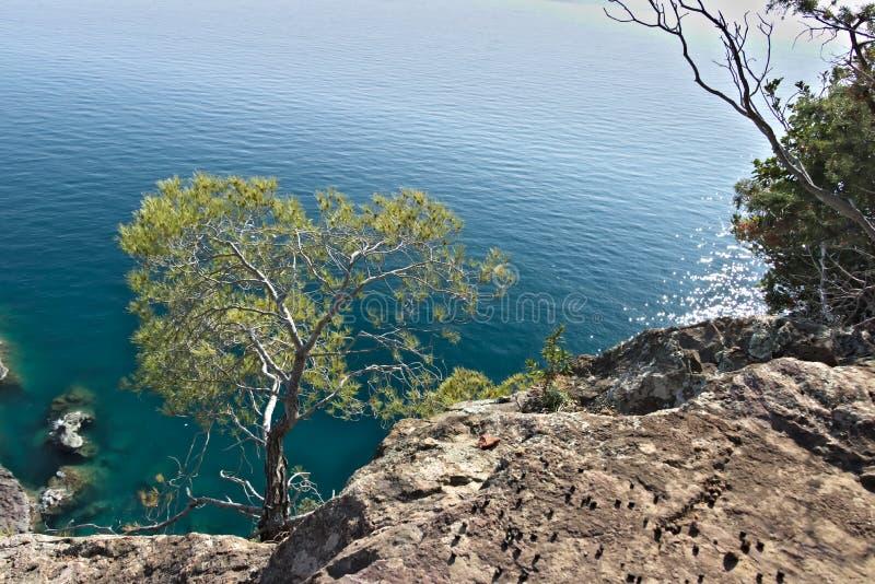 Bonassola n?ra Cinque Terre Ett litet sörjer växten på havsklipporna fotografering för bildbyråer