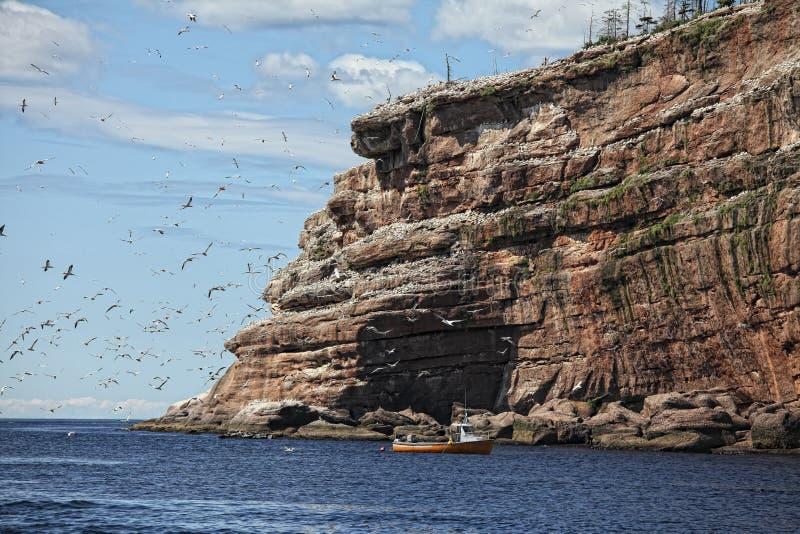 Bonaventure Island photos libres de droits