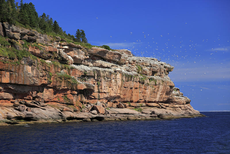 Bonaventure Island dans Gaspesie, Canada photos libres de droits