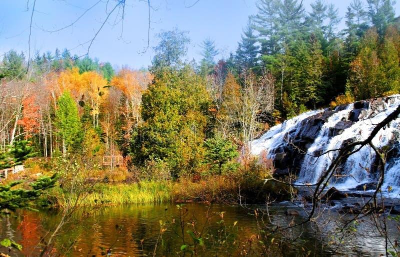 bond falls wody obrazy stock
