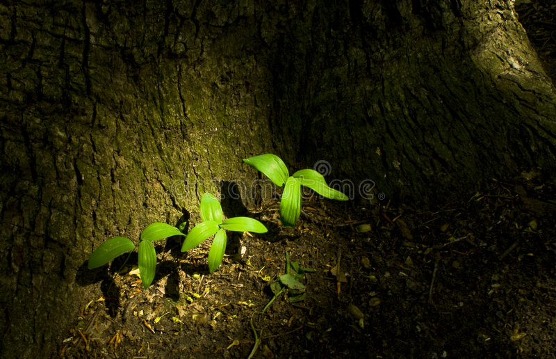 Download A bond of three stock photo. Image of background, light - 5174252