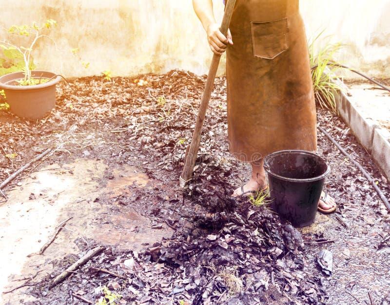 Bonde arbeta i de trädgårds- växterna med hacka gräva arkivbild