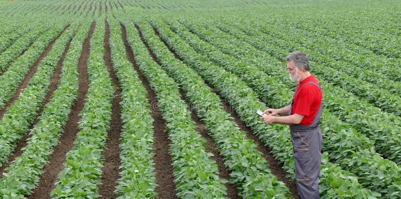 Bonde eller agronom i sojabönabönafält med minnestavlan arkivbilder