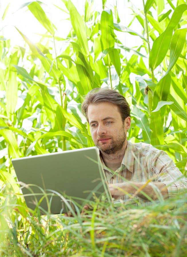 Bonde framme av havrefältet som arbetar på bärbar datordatoren royaltyfri foto