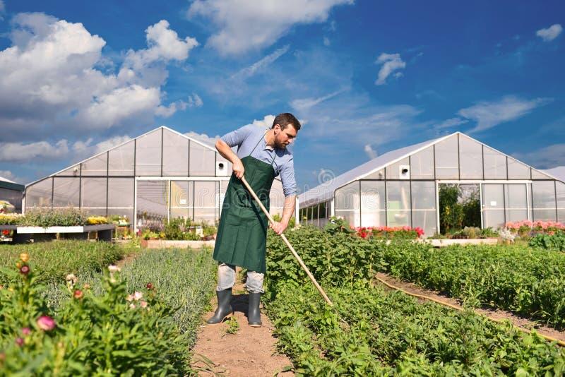 Bonde i jordbruk som odlar grönsaker - växthus i th royaltyfri foto