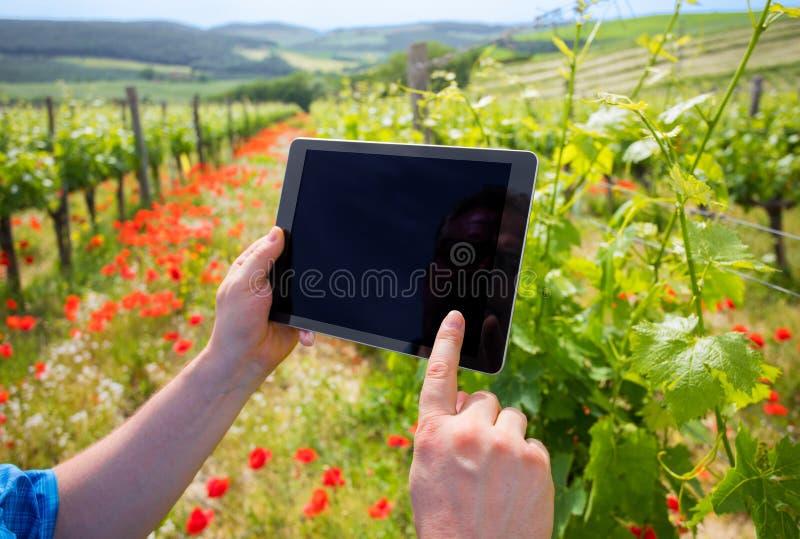 Bonde, i minnestavla och att använda för vingårdinnehav modern tech för dataanalys royaltyfri bild