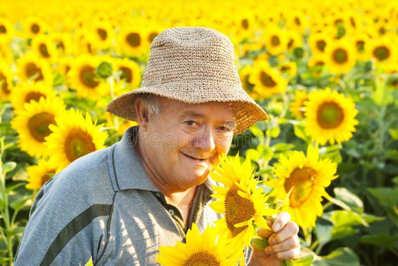 bonde i solrosfält royaltyfria foton
