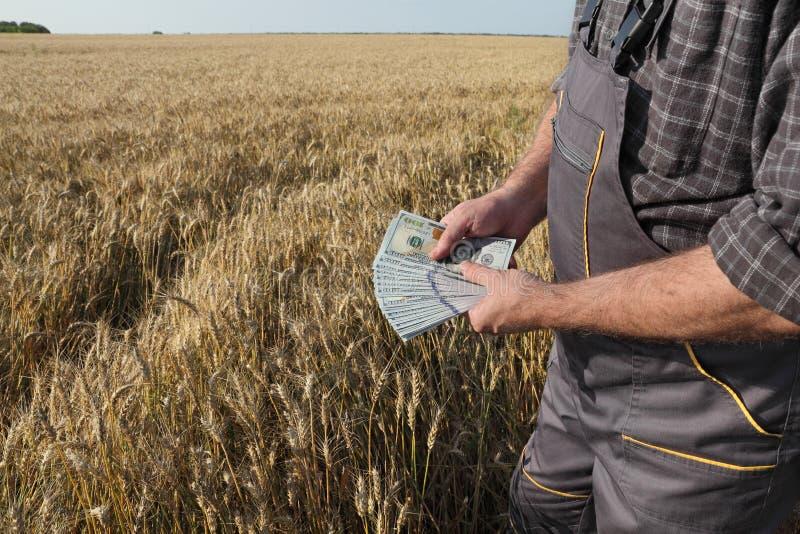 Bonde i vetefält med pengar i händer royaltyfri fotografi