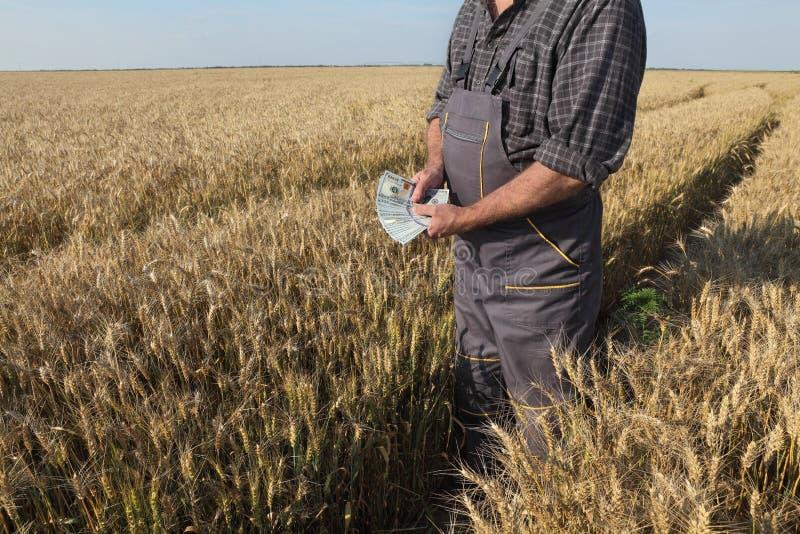Bonde i vetefält med pengar i händer royaltyfri bild