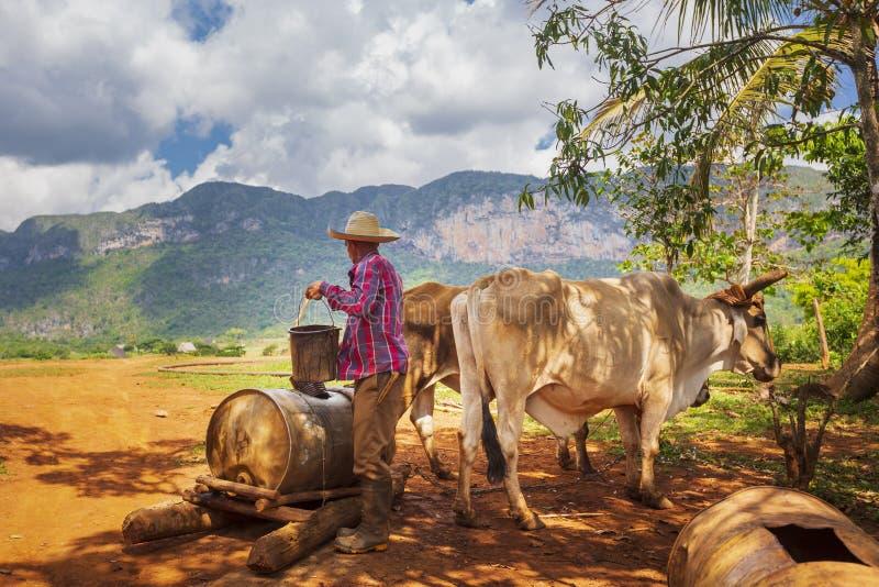 Bonde med arbetskläder som drar vatten från den gamla brunnen i den Vinales nationalparken, UNESCO, Pinar del Rio Province, Kuba arkivfoton