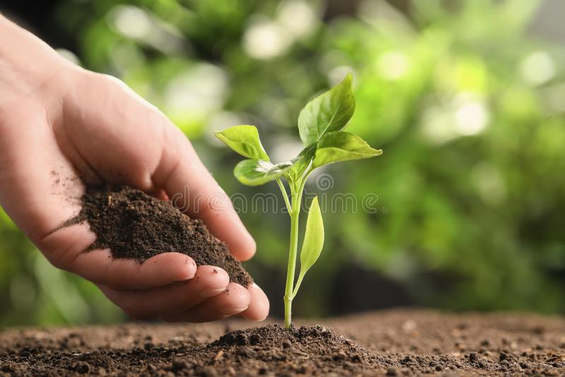 Bonde med handfulljord nära ung planta på suddig bakgrund, closeup royaltyfri bild