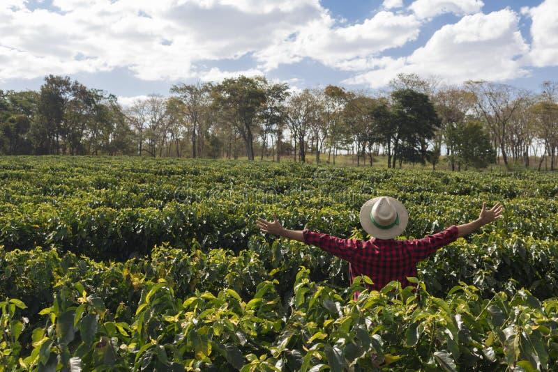 Bonde med hatten som ser fältet för kaffekoloni royaltyfri bild