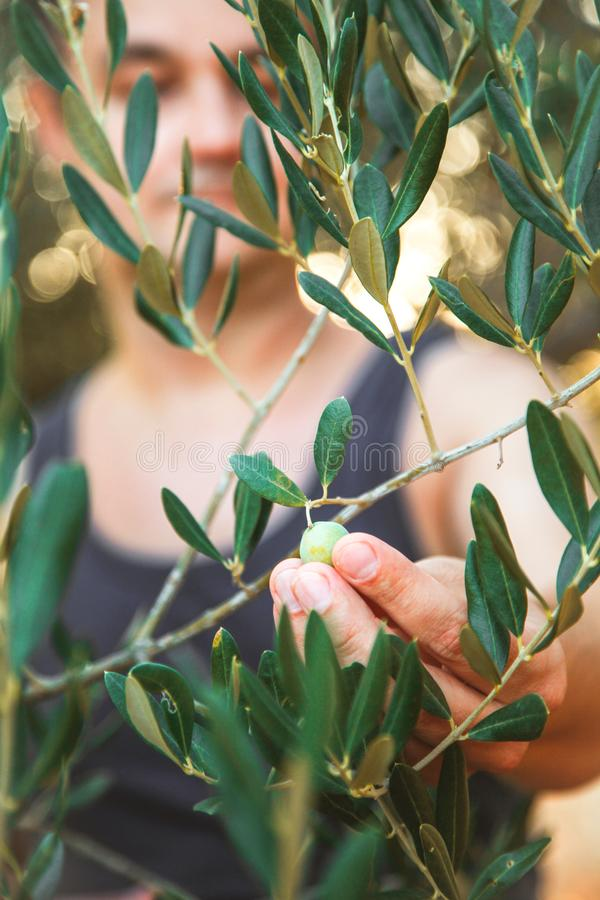 Bonde med päron arkivfoton