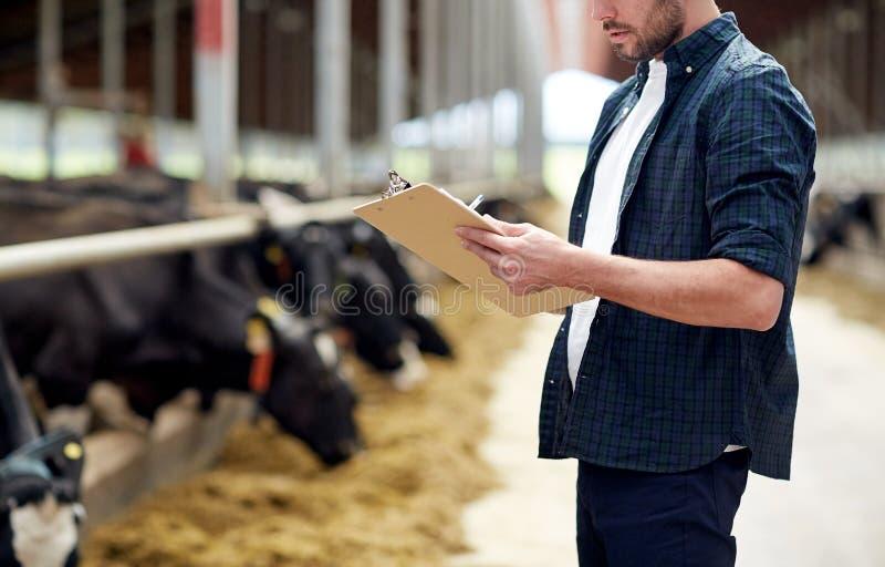 Bonde med skrivplattan och kor i ladugård på lantgård royaltyfria bilder