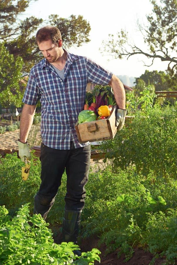 Bonde och spjällåda av ny jordbruksprodukter royaltyfri foto